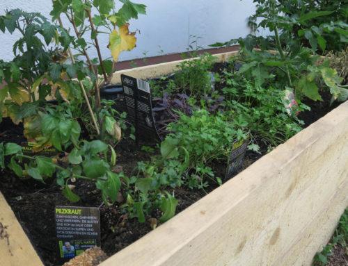 La'Bio-Pflanzen verbinden Kulturen – Das Flüchtlingsprojekt in der Jefferson Kaserne in Darmstadt