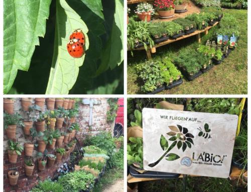 Pflanzenspende an Initiative Essbares Darmstadt