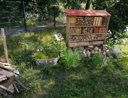 """Pflanzwettbewerb 2019 """"Wir tun was für Bienen"""""""
